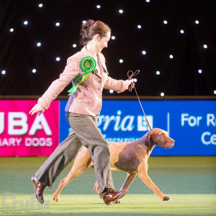 Saffy wins Best of Breed at CRUFTS 2015 - this is photographed in the Gundog Group ring, image by kind permission of Yulia Titovets.